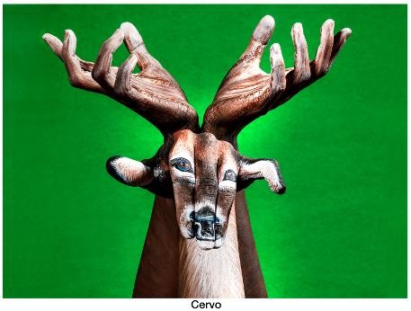 guido daniele 1 cervo