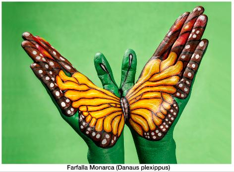 guido daniele 1 farfalla